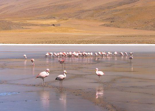 旅、村越慎司、EarthTribe、世界一周、ブログ、ボリビア、ウユニ湖、フラミンゴ